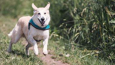 Kutya vagy gyep - muszáj választani?