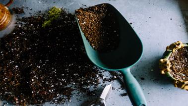 Mi köze van a szobanövénynek a gyepápoláshoz?