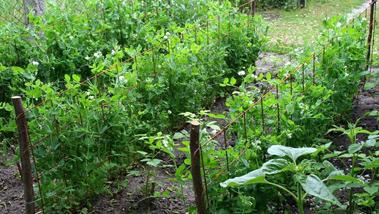 Ha ezt nem teszed meg, hiába locsolod a kertet: